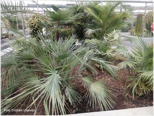 Foto plante